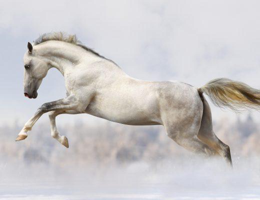 Yılkı Atı