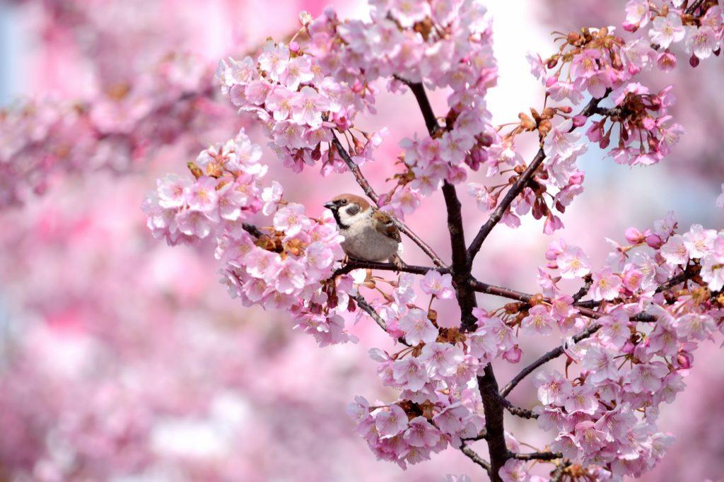 Marteniçka yazısı için çiçek tomurcukları fotoğrafı