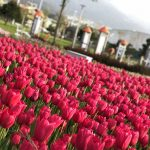 Mihraplı Park, Nilüfer, Bursa
