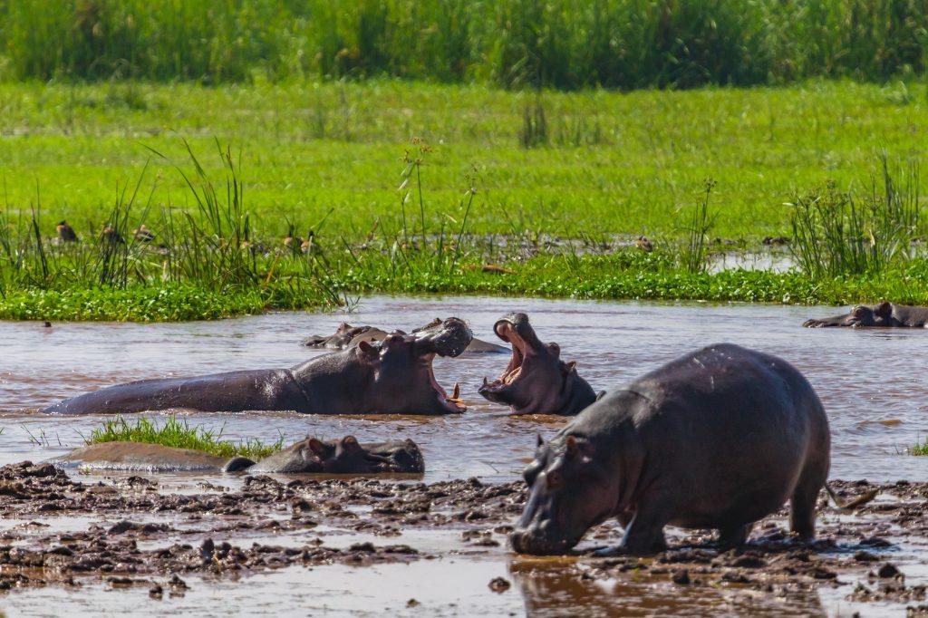 Manyara Gölü Milli Parkı, Tanzanya