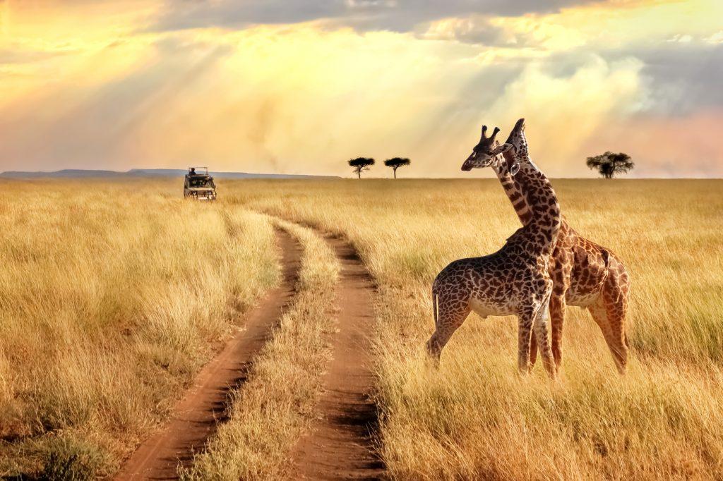 Serengeti Milli Parkı