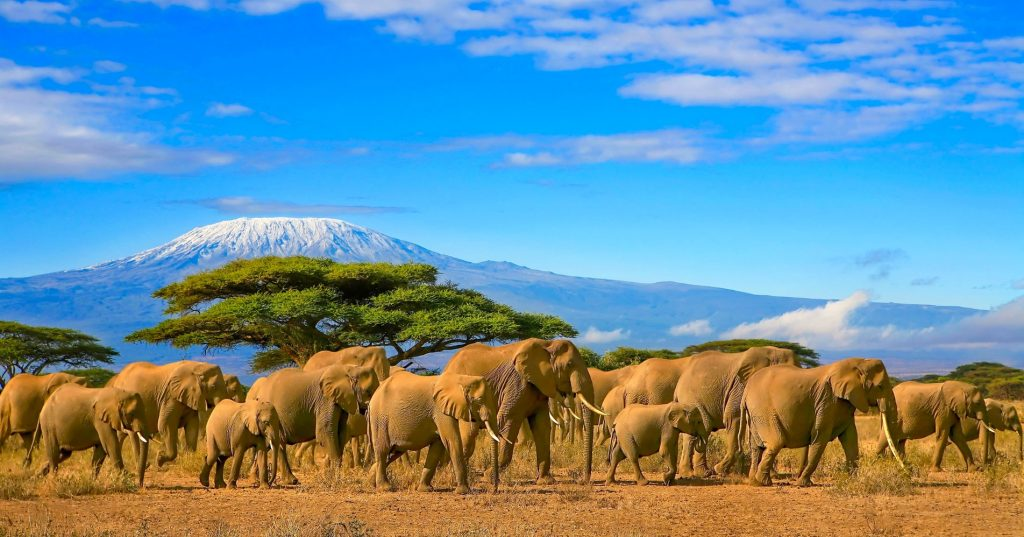 Kilimanjaro Dağı, Tanzanya