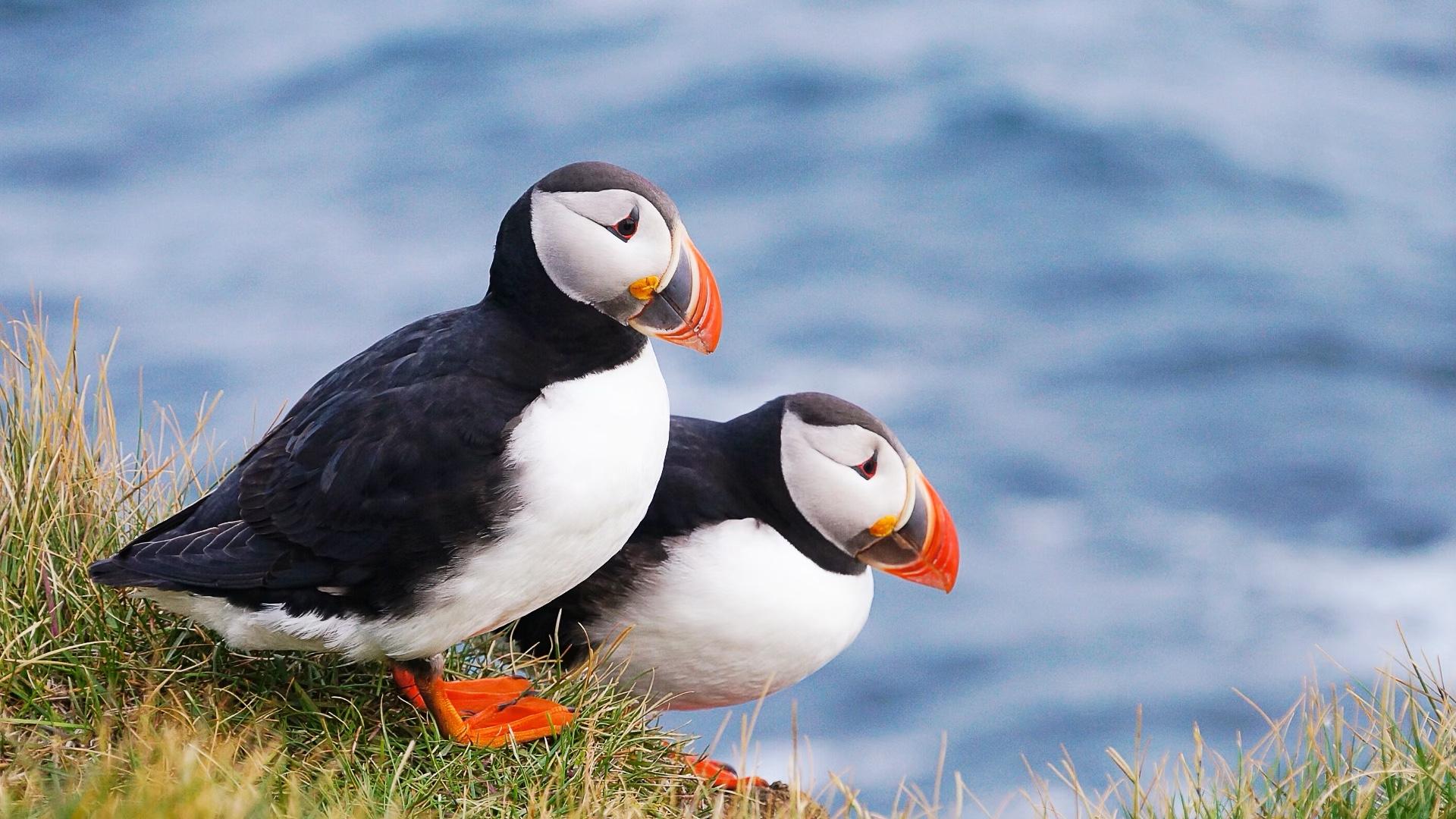 Yazı: Faroe Adaları   Yazan: Melih Daşgın