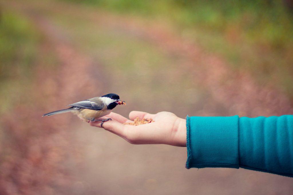 Yazı: Evet Dünyayı İyileştiremezsin Ama... | Yazan: Pınar Sude genç