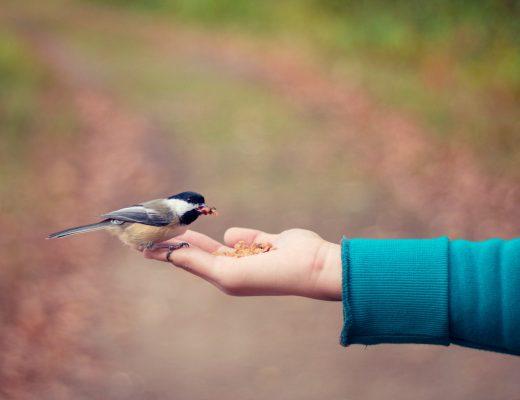 Yazı: Evet Dünyayı İyileştiremezsin Ama...   Yazan: Pınar Sude genç