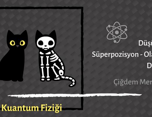 Yazı: Schrödinger ve Kedisi | Yazan: Çiğdem Mertoğlu