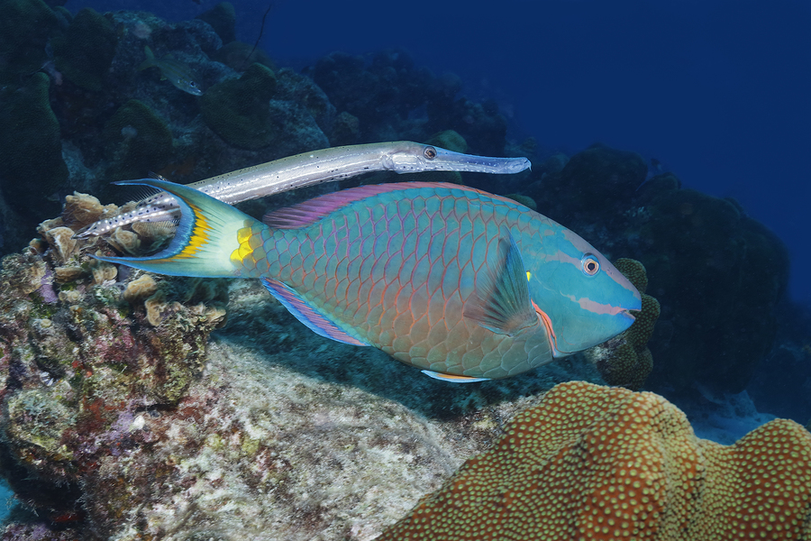 Yazı: Bonaire | Dalgıç Cenneti | Yazan: Emel Erem