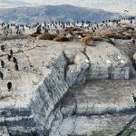 Yazı: Ushuaia | Dünya'nın Sonundaki Fener | Yazan: Pelin Öncüoğlu Işık
