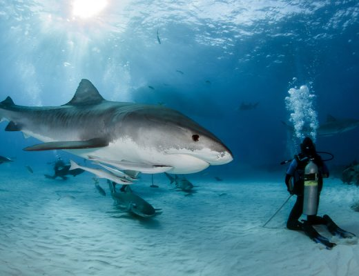 Yazı: Köpekbalıkları | Yazan: Emel Erem