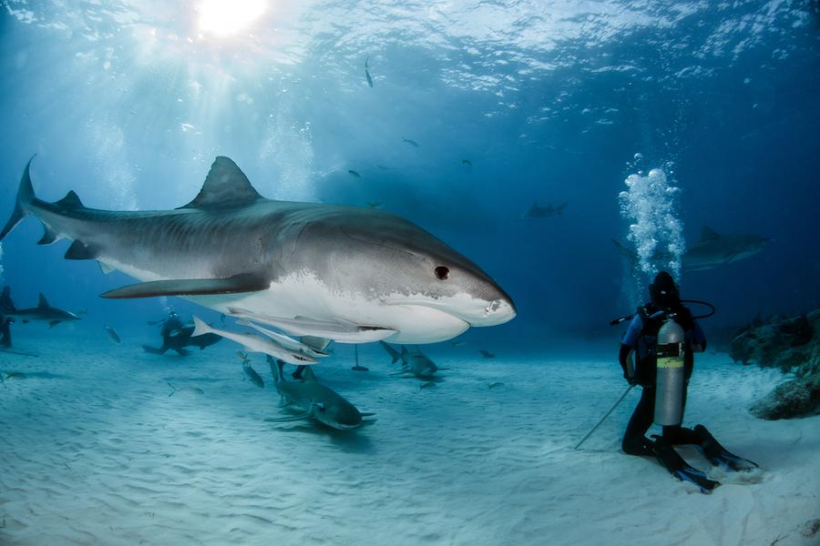 Yazı: Köpekbalıkları   Yazan: Emel Erem