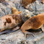 Ushuaia | Beagle Kanalı | Yazan: Pelin Öncüoğlu